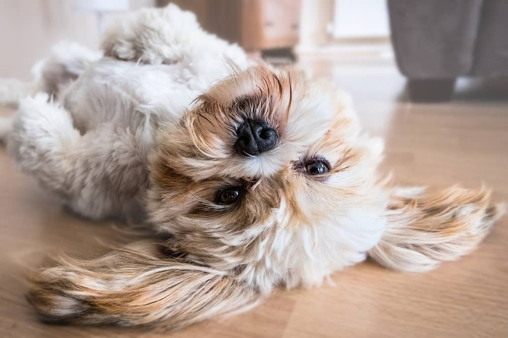 do dogs masterbate header