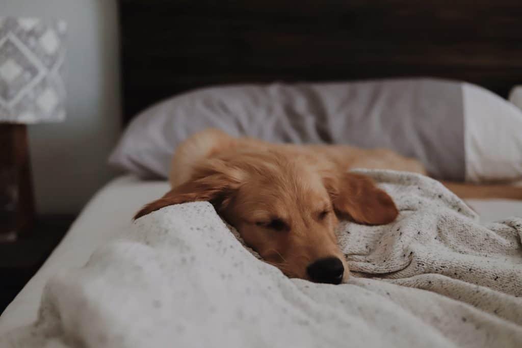 dog laying down image