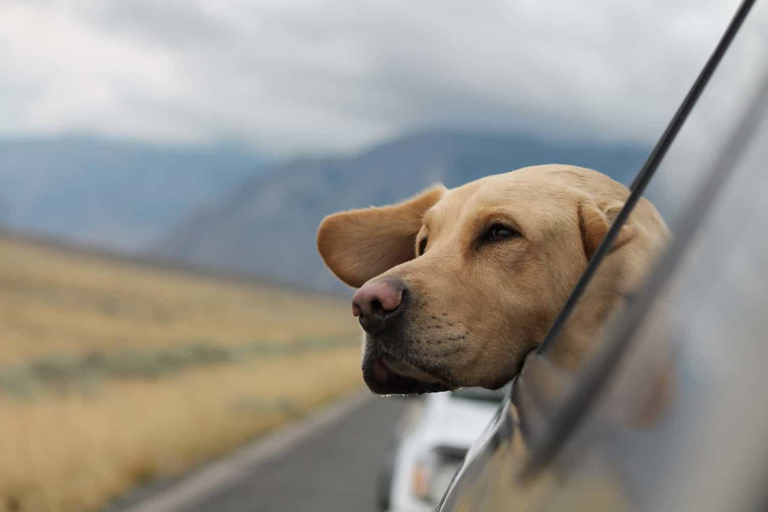 Can dogs catch a cold or get the flu?